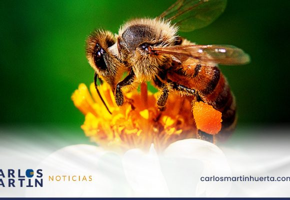 20 de mayo Día Mundial de las abejas